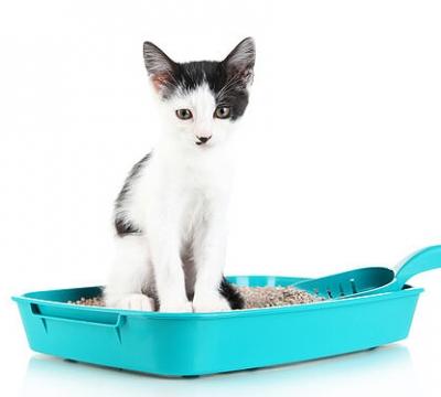 Caixa de areia do gato: dicas e soluções