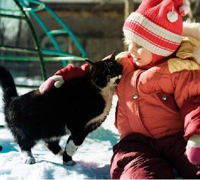 Felinos Companheiros: Independentes e Melhores Amigos