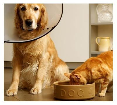 Ração de Cachorro para Gatos? Pode? E Vice-Versa?